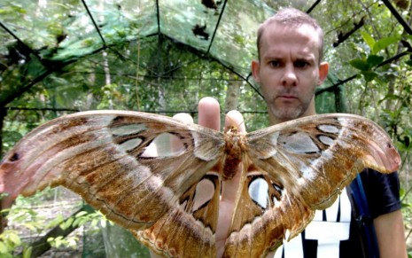 Wild Things Dominic Monaghan Philippines Butterfly Travelch Itokzxsbijnx Dominic Monaghan
