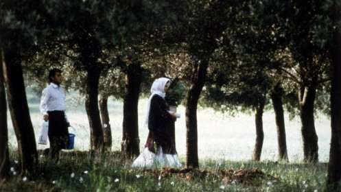 Image Under The Olive Trees