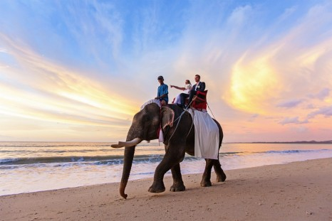 Wedding Photo Kao Lak Elephant Riess
